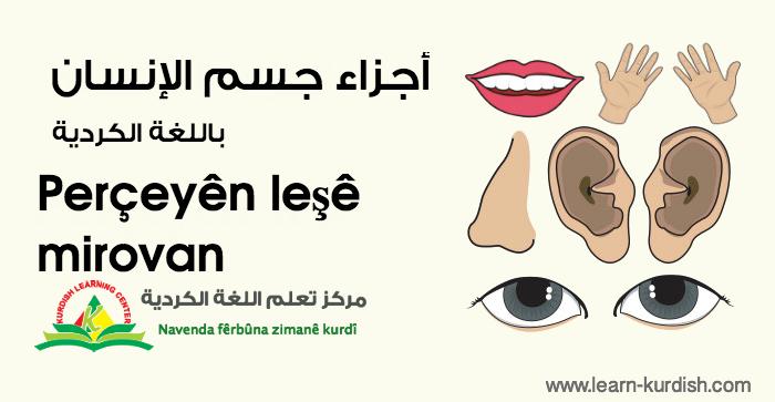 كلمات كردية ومعناها بالعربي - أجزاء جسم الانسان مع النطق